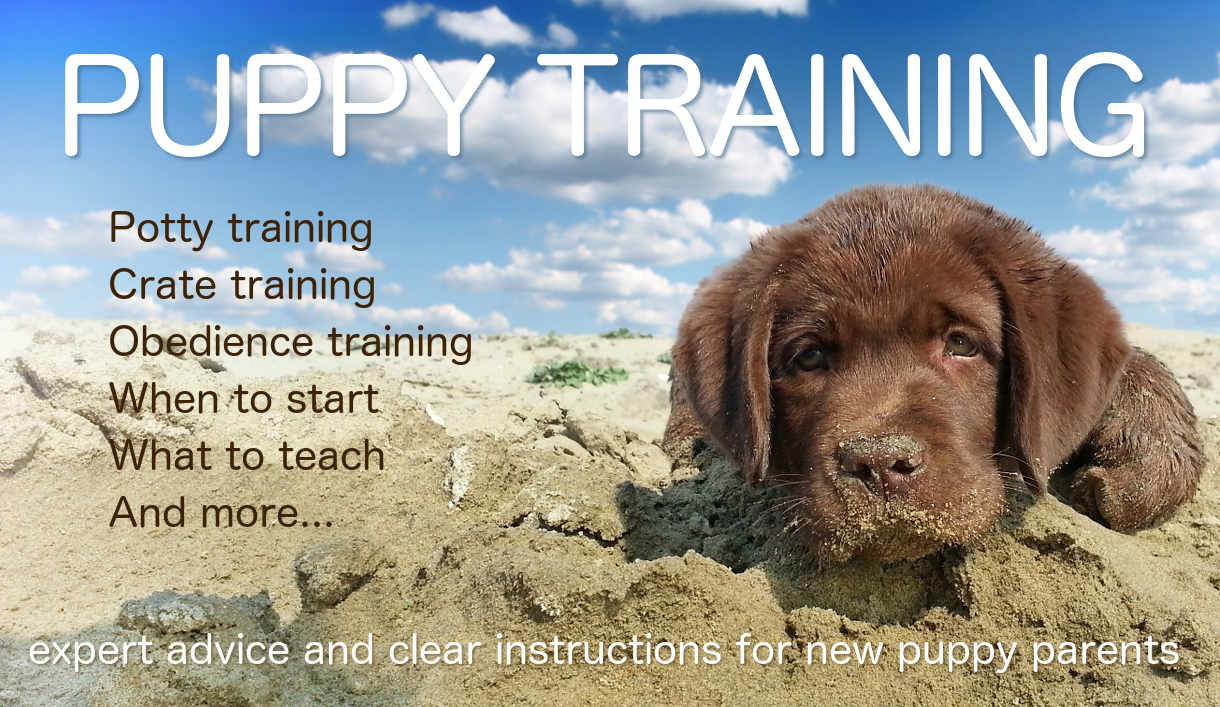Puppy Training Banner