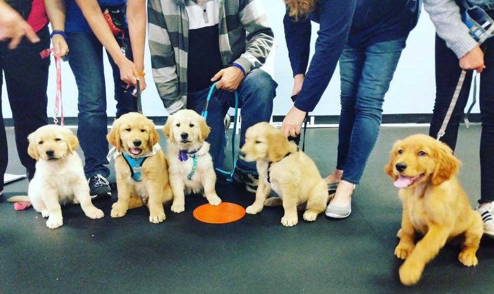 Puppy Training Class 1